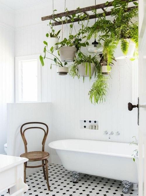Mettre des plantes dans la salle de bain